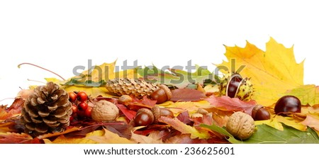 Studio shot of forest fruits in line lying horizontally with autumn leaves on white background