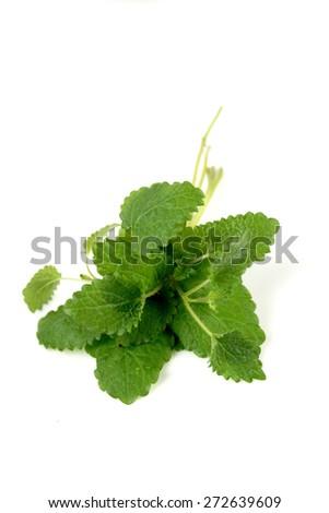 Studio shot of fresh mint - stock photo