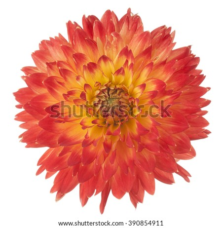 Studio Shot of Orange and Yellow Colored Dahlia Flower Isolated on White Background. Large Depth of Field (DOF). Macro. - stock photo