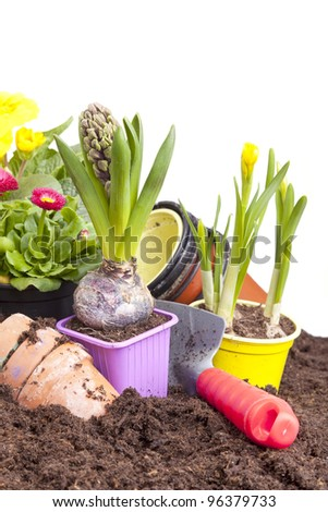 studio-shot of planting flowers in flower soil, with garden tools ,various flowers and terracotta flower pots, isolated on white. - stock photo