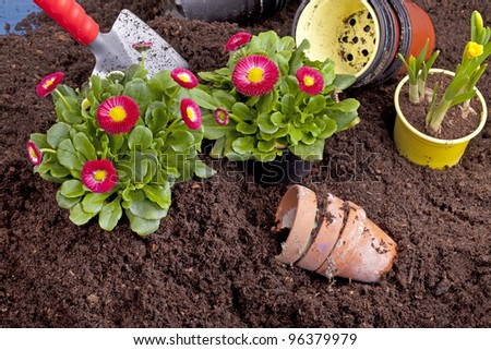 studio-shot of planting flowers in flower soil, with garden tools ,various flowers and terracotta flower pots. - stock photo