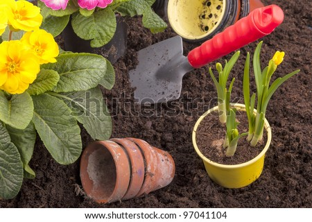 studio-shot of planting flowers in flower soil, with garden tools ,various flowers and terracotta flower pots.