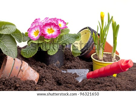 studio-shot of planting  flowers in soil and in a plastic pot with a garden trowel , isolated on white. - stock photo