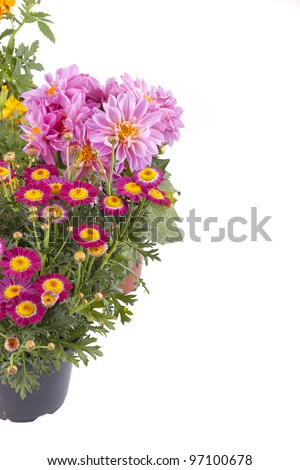 studio-shot of various spring flowers in a plastic pot ,isolated on white - stock photo