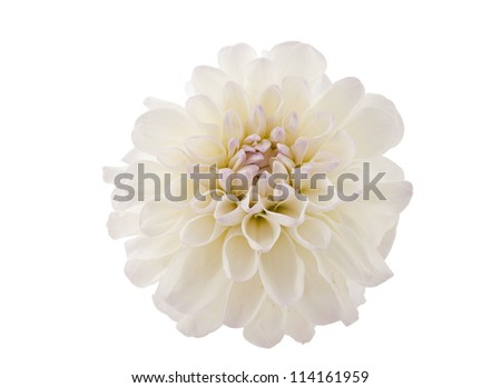 Studio Shot of White Color Dahlia Isolated on White Background. Macro. Symbol of Elegance, Dignity and Good Taste. - stock photo