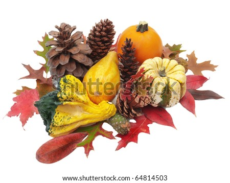 Studio still life arrangement of colorful miniature gourds and pumpkin with pine cones and red autumn leaves. Isolated on white. Good for Thanksgiving or Harvest Festival holiday decoration. - stock photo