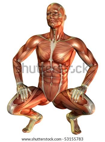 Study muscle man squatting - stock photo