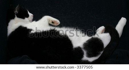 study of a sleeping black and white cat, a true creature of comfort - stock photo