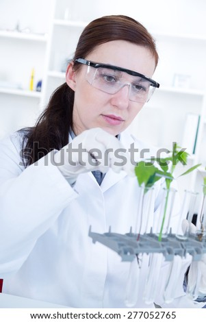 study of genetic modified GMO plants in the laboratory.. - stock photo