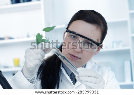 study of genetic modified GMO plants in the laboratory. - stock photo