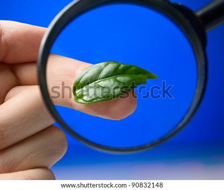 Studying a green leaf through the magnifying glass - stock photo