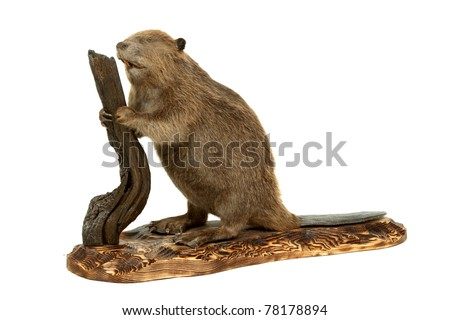 Stuffed animal of the young beaver. It is isolated on a white background