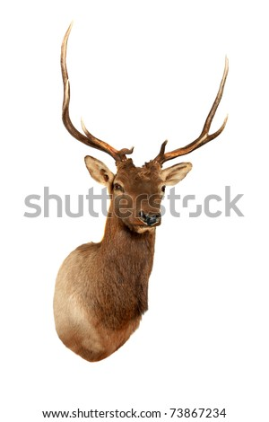 stuffed dear head, isolated on white with room for your text - stock photo