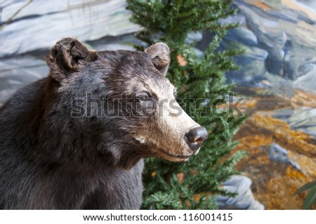 stuffed north american brown bear with shallow dof