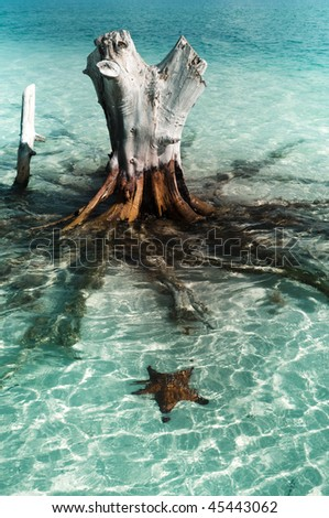 Stump and sea star under water - stock photo