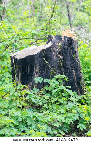 Stump in the forest - stock photo