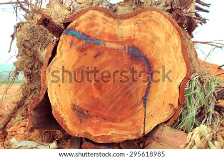 Stump in the forest,thailand - stock photo