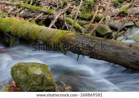 Stump in water - stock photo