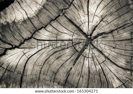Stump of tree felled - stock photo