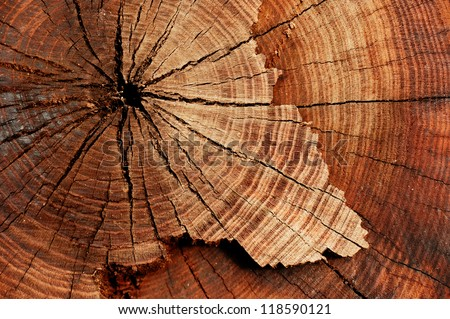 stump of tree felled - section of the trunk with annual rings - stock photo