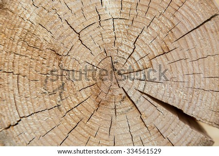 Stump of tree felled - section of the trunk with annual rings close up - stock photo
