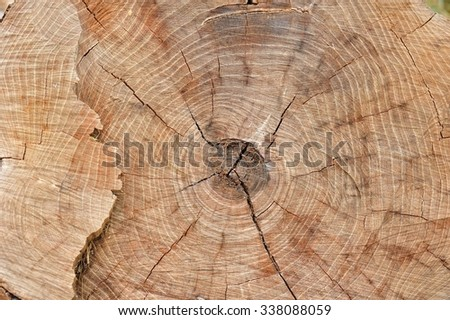 stump texture closeup/background of stump texture closeup - section of the trunk with annual rings ; outdoor - stock photo