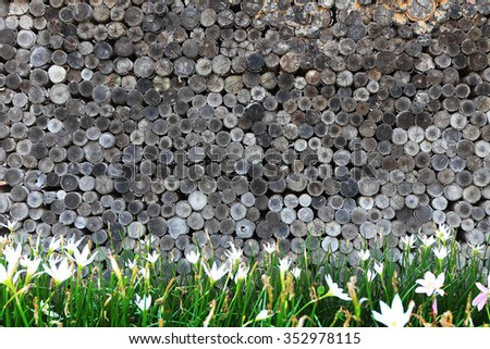stump wood background and flower - stock photo