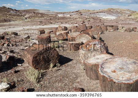 Stumps of ancient trees, now petrified lay scattered throughout the desert in the Painted Desert National Park, Arizona, USA.  - stock photo