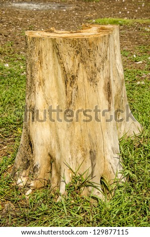 Stumps of trees. - stock photo