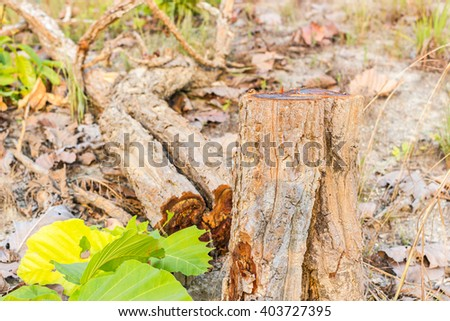 Stumps on the valley caused by deforestation and slash and burn type of agriculture of Thailand  - stock photo