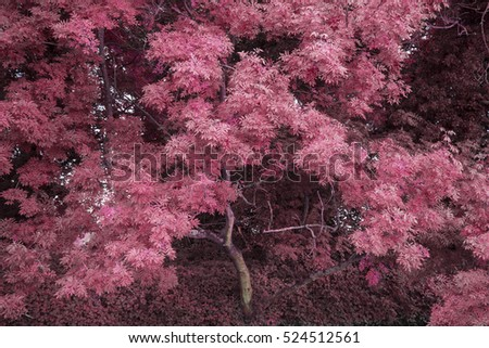 Stunning alternate color forest landscape tree concept image