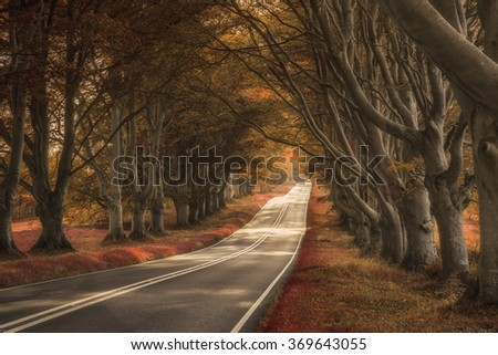 Stunning alternate colored surreal forest woodland landscape - stock photo