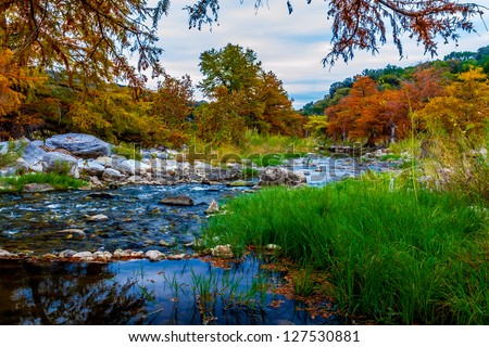 Stunning Fall Colors of Texas Cypress Trees Surrounding the Crystal Clear Texas Hill Country Pedernales Rivers. - stock photo