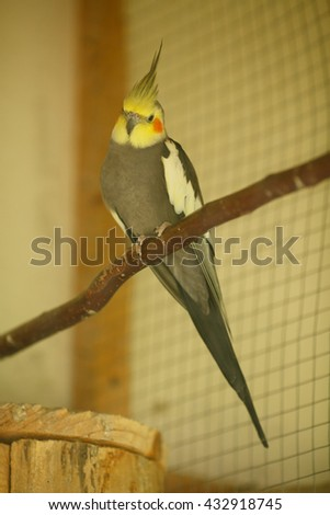 Stunning gray parrot with yellow head sits on a branch - stock photo