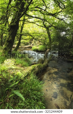 Stunning landscape of river flowing through lush forest Golitha Falls in England