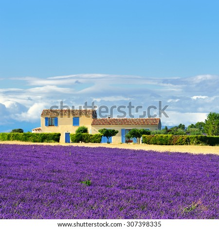 Stunning landscape with lavender field and farmhouse on background. Plateau of Valensole, Provence, France. Focus on lavender field - stock photo