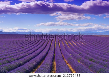 Stunning landscape with lavender field at evening. Plateau of Valensole, Provence, France - stock photo