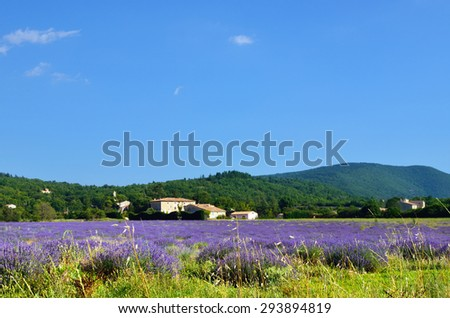 Stunning landscape with lavender field. Plateau of Sault, Provence, France - stock photo