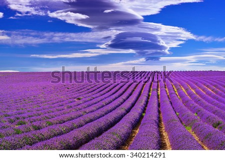 Stunning landscape with lavender field under dramatic sky. Plateau of Valensole, Provence, France
