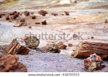 Stunning petrified wood in the Petrified Forest National Park, Arizona, USA - stock photo