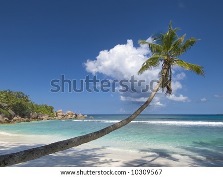 Stunning picture of palm tree overhang pristine white sand tropical beach and blue green waters of Indian ocean slapping the isolated shoreline, La Digue Island, Seychelles - stock photo