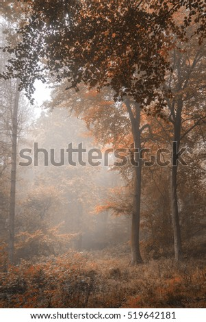 Stunning vibrant evocative Autumn Fall foggy forest landscape