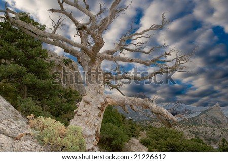 sturdy dry tree on the slope of mountain - stock photo