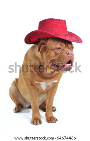 Stylish Big Dog in Cowboy Hat - stock photo