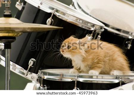Stylish Cat stylish cat drummer outdoors shoot stock photo 45973963 - shutterstock