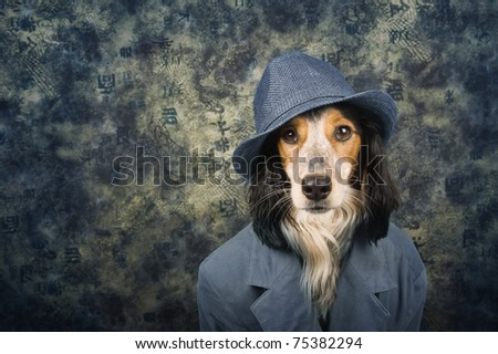Stylish dog with hat and costume - stock photo