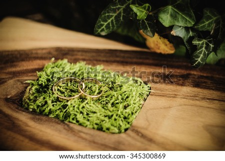 stylish gorgeous luxury golden wedding rings on a unusual wooden box with green moss, wood background