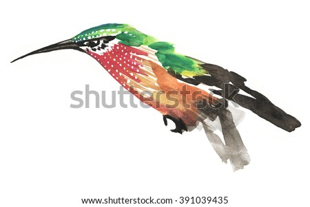Stylish watercolor painting of green and red humming bird isolated on white background