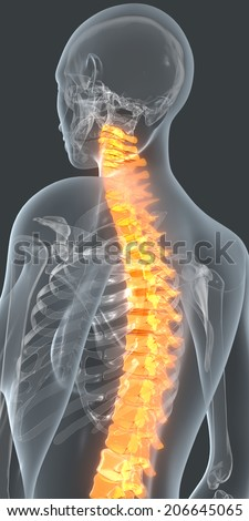 Stylited visualization of the skeleton inside a transparent male body. The spine is highlighted in orange to simulate back pain.