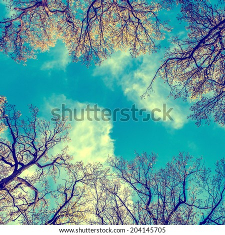 Stylized colorized vintage green branches in a wood and blue sky - stock photo